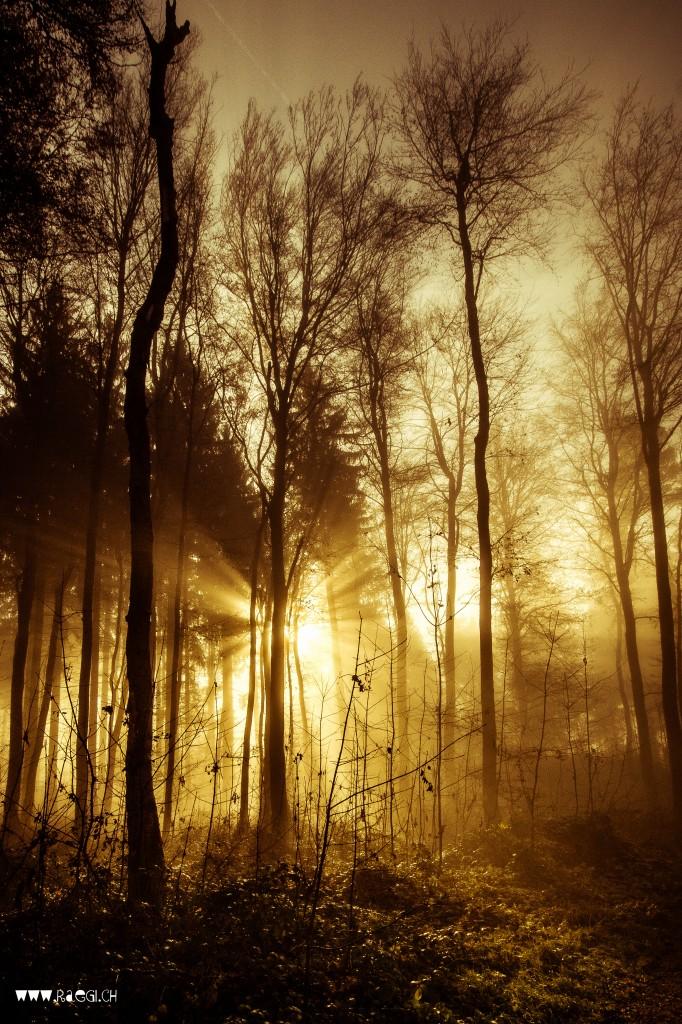 November Sonne