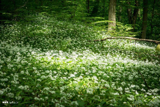 Frühlingstag im Wald