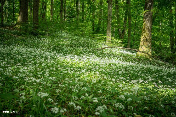 Im Wald im wunderschöne Wald